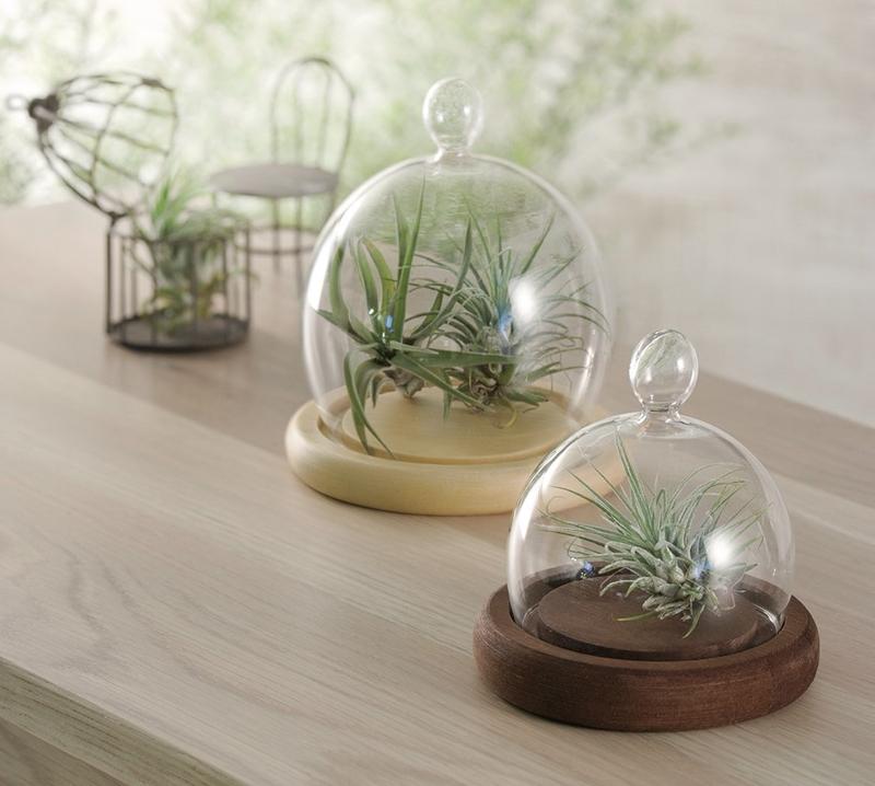 透き通るガラスが夏の暑さを和らげてくれそう~この夏一押しの商品、ガラスドームとガラスボトルです♪